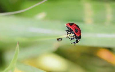 Motion «Généraliser les pratiques et techniques alternatives à l'utilisation des pesticides de synthèse»
